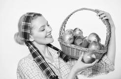 Μανάβικο Τέλειο μήλο Διατροφή μήλων έναρξης Η γυναίκα συμπαθεί τα φυσικά φρούτα Κηπουρός κοριτσιών συγκομιδών μήλων κηπουρών της  στοκ φωτογραφίες με δικαίωμα ελεύθερης χρήσης