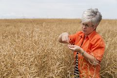 Farmer. Woman is standing in the cereal box and consider the maturity level Royalty Free Stock Photos