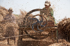 Farmer. Is cutting dry harvest of rice. Bagan, Burma Royalty Free Stock Photos