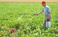 Farmer. Exterminator spraying soybean field stock photos