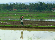 Farmer. A farmer walking across the rice field in Central Java, Indonesia Royalty Free Stock Photography
