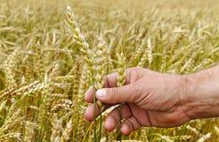 Farmer. Stock Photography