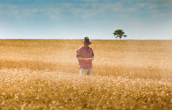 Farmer στον τομέα σίτου Στοκ Φωτογραφίες