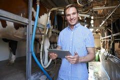 Η γαλακτοκομική Farmer χρησιμοποιώντας την ψηφιακή ταμπλέτα στο άρμεγμα που ρίχνεται Στοκ Εικόνα