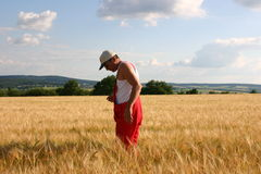 Farmer. Inspecting the field Stock Images