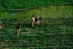 Farmer στοκ φωτογραφίες