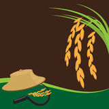 Farmer agriculture. Asian farmer harvest of the rice field in harvest season Vector illustration Royalty Free Stock Images