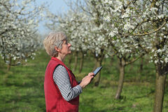 Farmer or agronomist in blossoming plum orchard Stock Photo