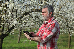 Farmer or agronomist in blossoming plum orchard Royalty Free Stock Photography