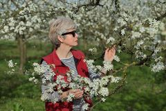 Farmer or agronomist in blossoming plum orchard. Female agronomist or farmer examining blooming plum trees in orchard Royalty Free Stock Photos