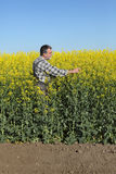 Farmer or agronomist in blossoming rapeseed field Stock Photography