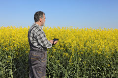 Farmer or agronomist in blossoming rapeseed field Stock Image