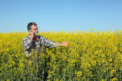 Farmer or agronomist in blossoming rapeseed field Royalty Free Stock Photos