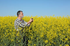Farmer or agronomist in blossoming rapeseed field Royalty Free Stock Images