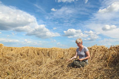 Farmer or agronomist inspect damaged wheat field Royalty Free Stock Photos