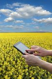 Farmer or agronomist inspecting blossoming rapeseed field. Agronomist or farmer examine blossoming canola field, using tablet, spring time Royalty Free Stock Images
