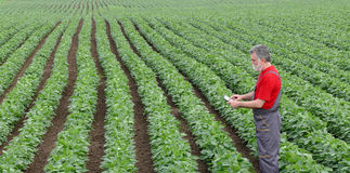 Farmer or agronomist in soy bean field with tablet Stock Images