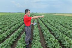 Farmer or agronomist in soy bean field with tablet Royalty Free Stock Photos