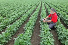 Farmer or agronomist in soy field Stock Photo