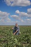 Farmer in watermelon field examining crop. Farmer or agronomist in watermelon field gesturing with thumb up Royalty Free Stock Image