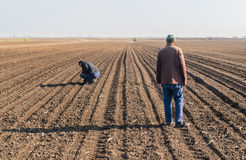 Farmer analyze soya seed after sowing crops at agricultural fiel. Farmers analyze soya seed after sowing crops at agricultural field in spring Royalty Free Stock Photos