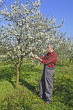 Farmer analyzes flower cherry stock photo