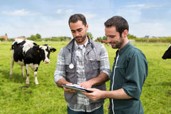 Free Farmer And Veterinary Working Together In A Masture With Cows Stock Image - 55649811