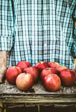 Farmer with apples Royalty Free Stock Image