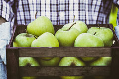 Farmer with apples. Organic fruit. Farmers hands with freshly harvested fruit. Fresh organic apples Stock Photo