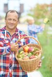 Farmer with apples Stock Photos