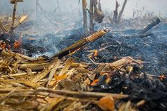Farmer arson post-harvest remains of corn, which resulted in the killing of microorganisms, as well as small animals and smoke, di royalty free stock image