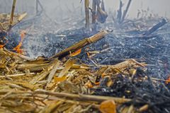 Farmer arson post-harvest remains of corn, which resulted in the killing of microorganisms, as well as small animals and smoke, di stock photos