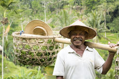 Farmer At Work In Rice Paddy, Bali Royalty Free Stock Photo
