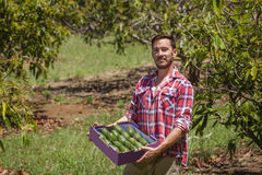 Farmer with avocados Royalty Free Stock Images