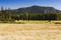 Farmer baling hay Royalty Free Stock Photography