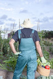 Farmer with a basket of vegetables Royalty Free Stock Photos