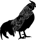 Farmer bird cock. Bird cock. Rooster black silhouette vector isolated on white background. Royalty Free Stock Photography