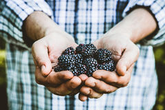 Farmer with blackberries Stock Images
