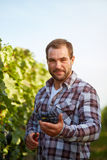 Farmer with blue grapes at harvest Royalty Free Stock Photography