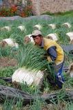 FARMER BOYACENSE Royalty Free Stock Images