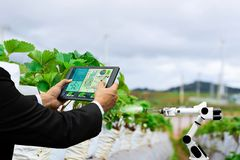 Farmer business holding a tablet smart arm robot work strawberry care agricultural machinery. Technology stock image