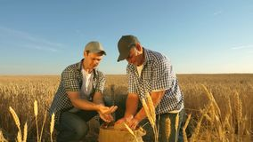 Farmer and businessman teamwork. agronomist and farmer hold in their hands a grain of wheat in field. Harvesting cereals