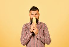 Farmer with calm face smells yellow corn. Farming and autumn crops concept. Guy shows his harvest. Man with beard holds. Corn cob on yellow background royalty free stock photo