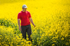 Farmer in Canola Field Stock Image