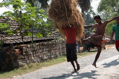 Farmer carries rice from the farm home Royalty Free Stock Photography