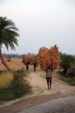 Farmer carries rice from the farm home Stock Photos