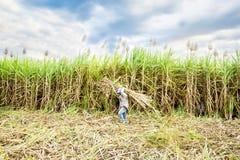 Farmer carring sugarcane Royalty Free Stock Photos
