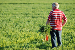 Farmer and carrots Royalty Free Stock Photography