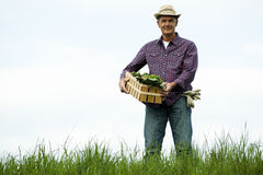Farmer carrying  a crate of vegetables Royalty Free Stock Photography