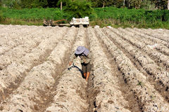 Farmer cassava planting Stock Photography